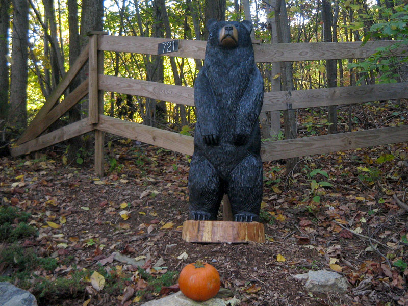 Big black bear spotted in nelson county sleepy hollow art