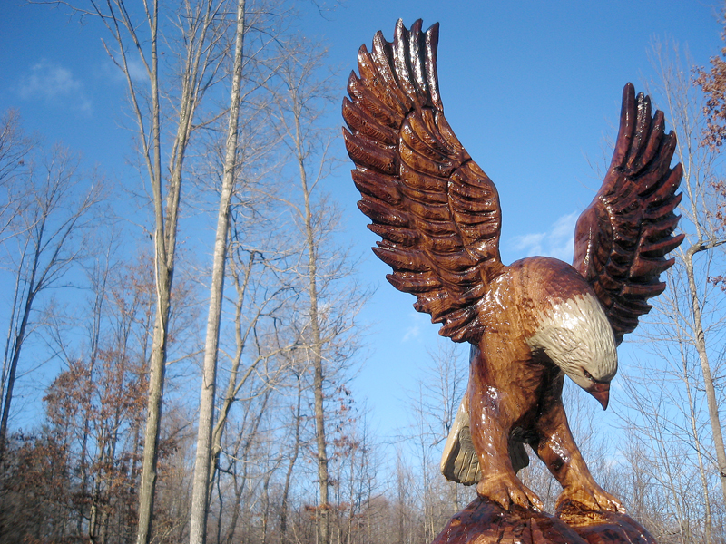 Bald eagles sleepy hollow art
