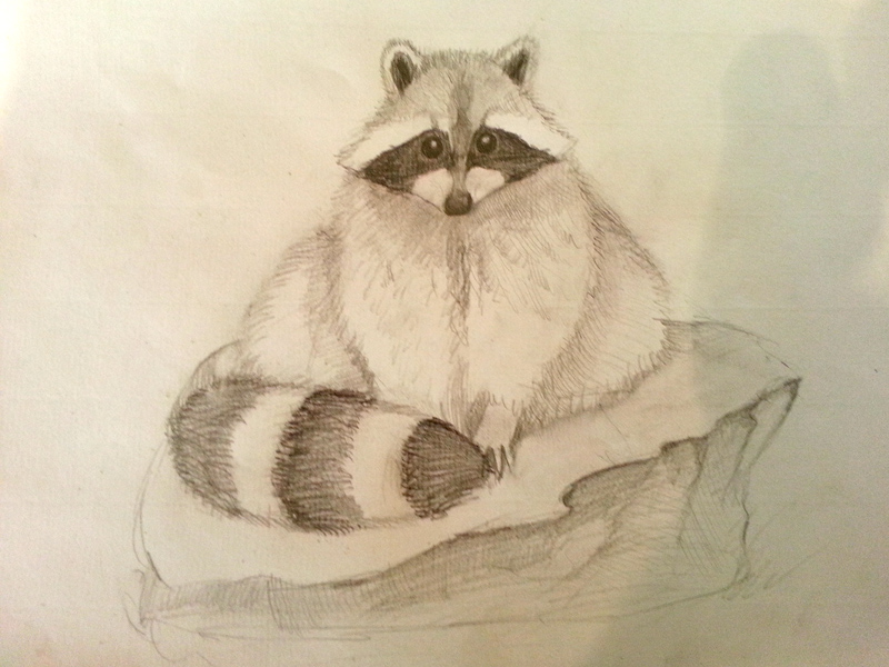 Pet Raccoon