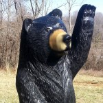 Waving Black Bear