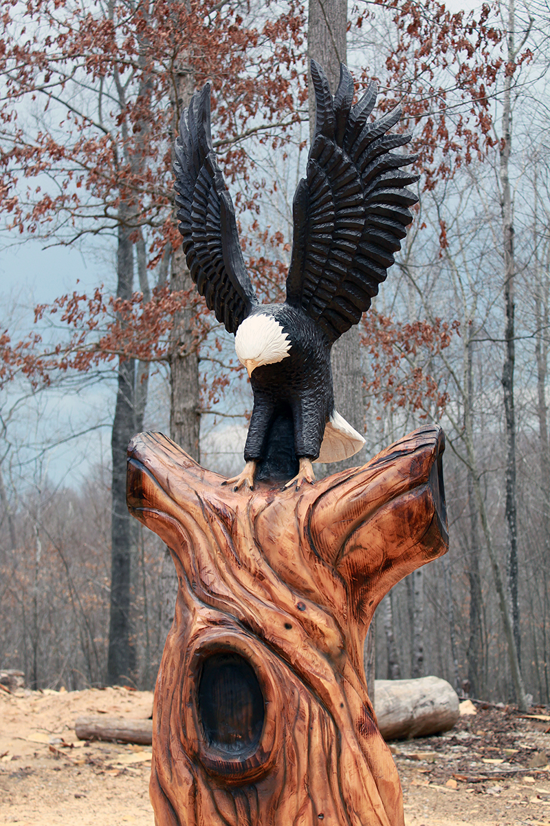 Bald eagle landing sleepy hollow art